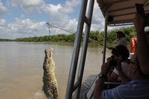 Kakadu Jumping croc 009