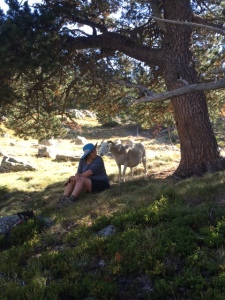 kerrie-with-sheep-corrynne
